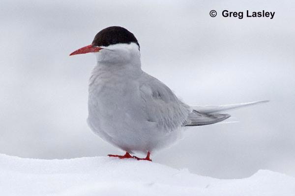 Animales de la Antártida - Aves