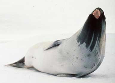 Animales de la Antrtida  ballenas y focas