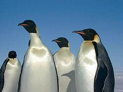 Animales de la antartida